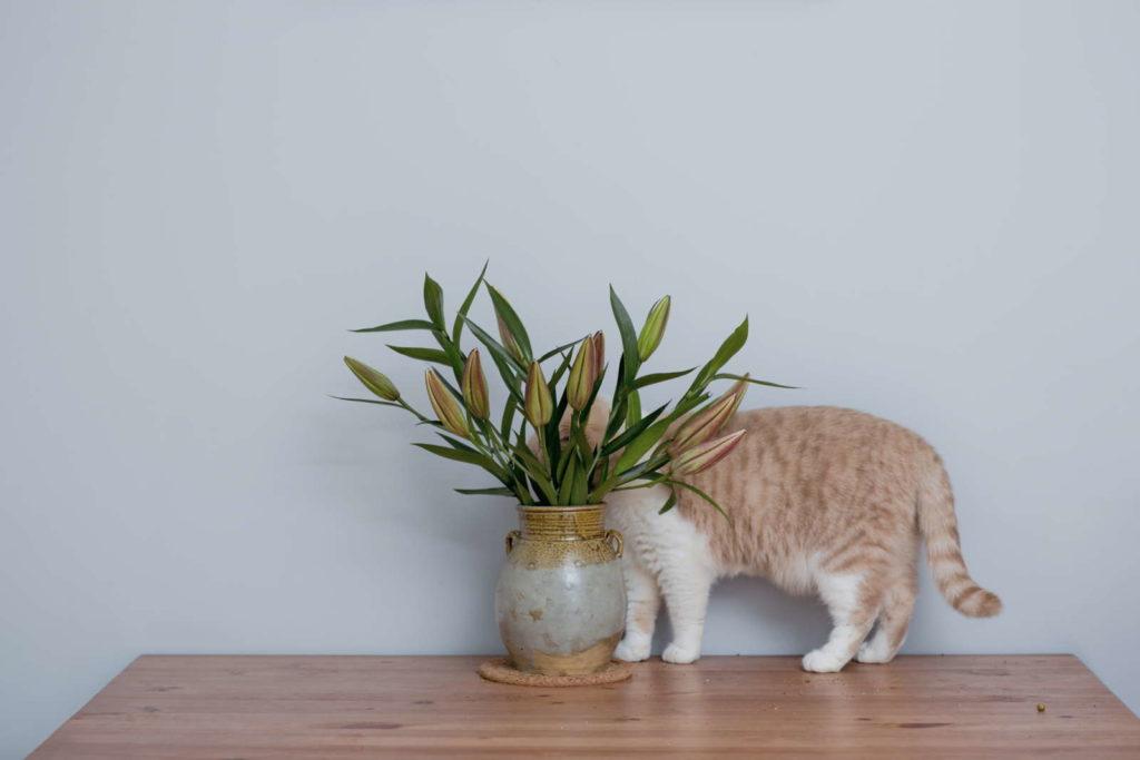 Katze hinter Lilienstrauß versteckt auf holztisch