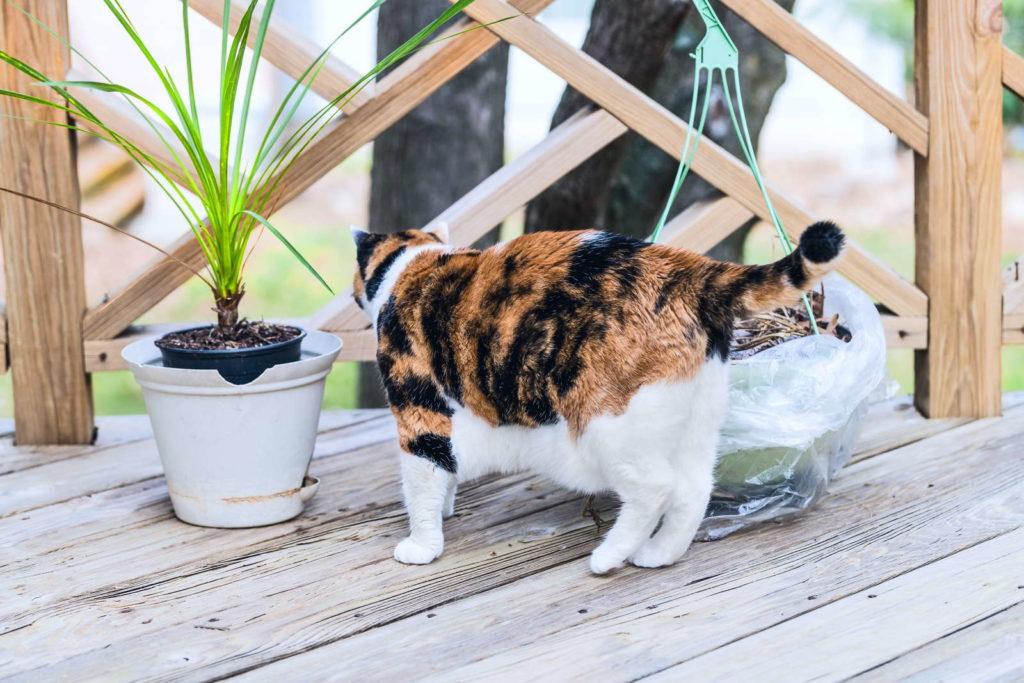 Katze neben Drachenbaum auf Terasse