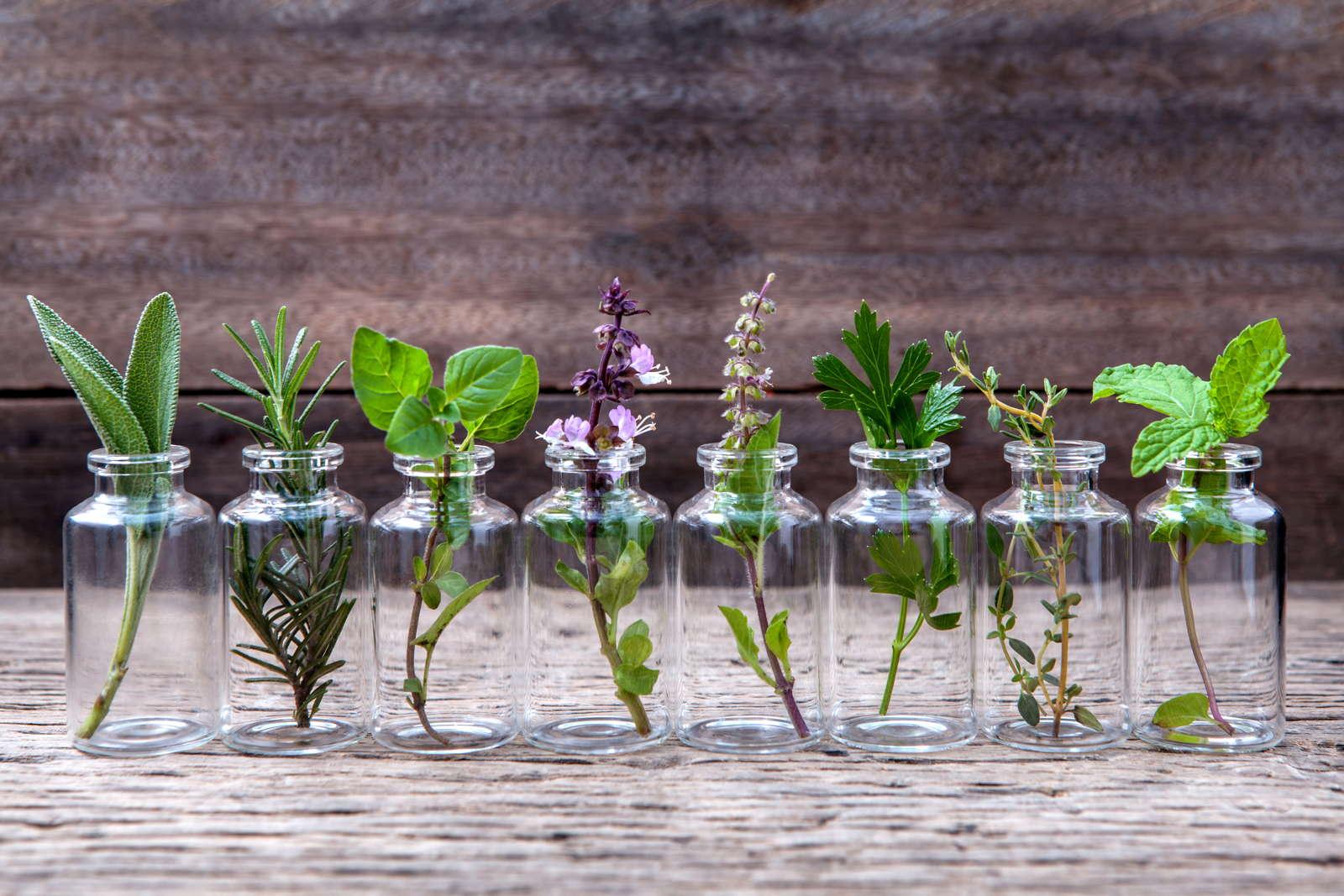Kräuter In Wasser Anbauen Unsere Top 7 Plantura