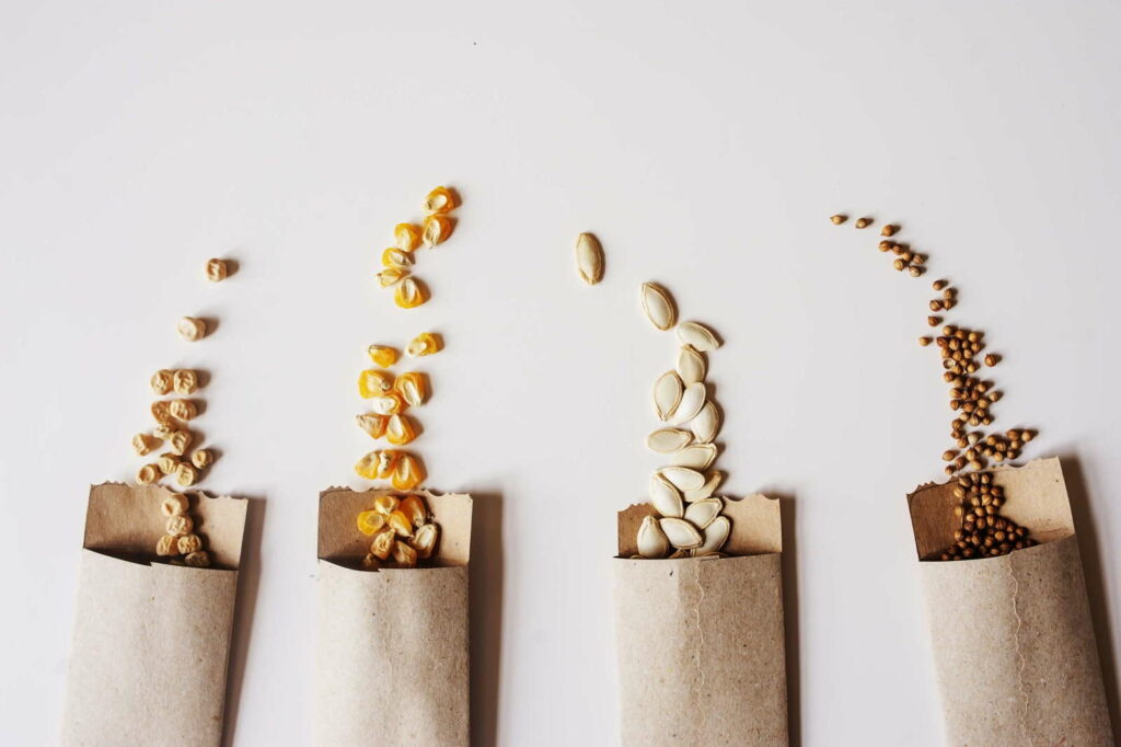 Saatgut Samen in papiertüten