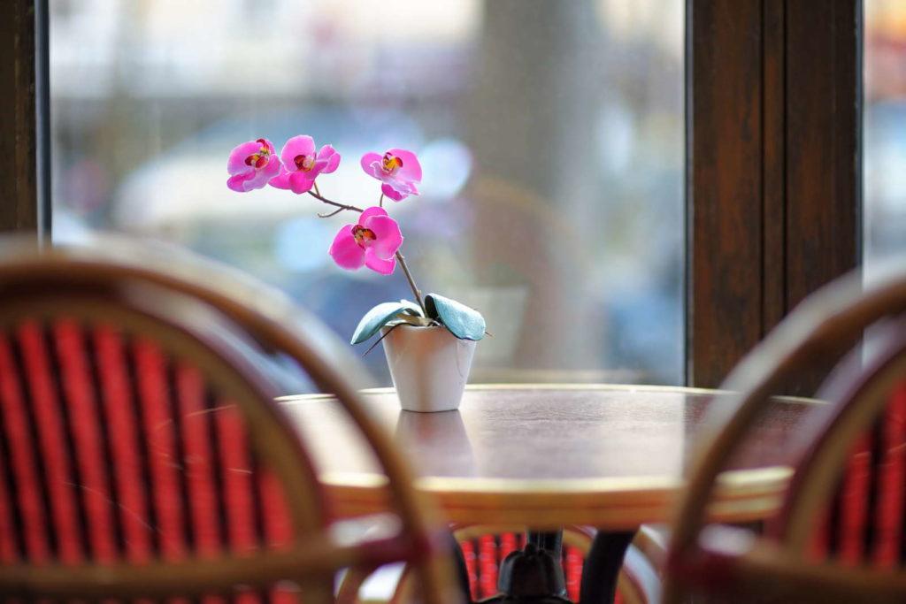 pinke Phalaenopsis vor einem Fenster