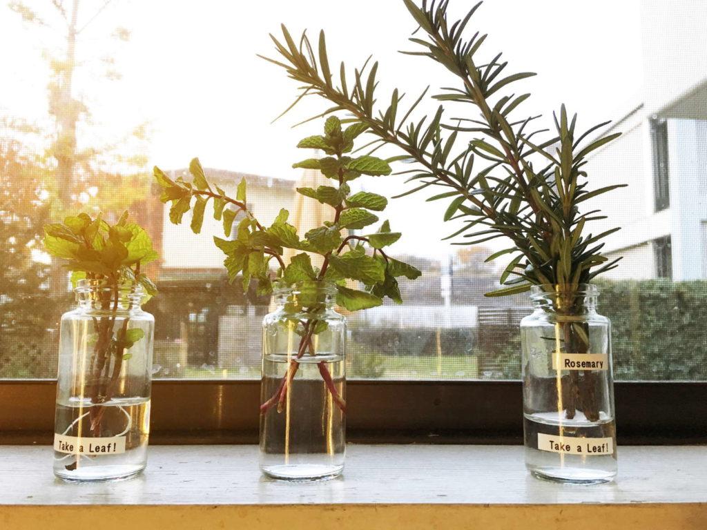 Rosmarin und Kräuter in Glas auf Fensterbank
