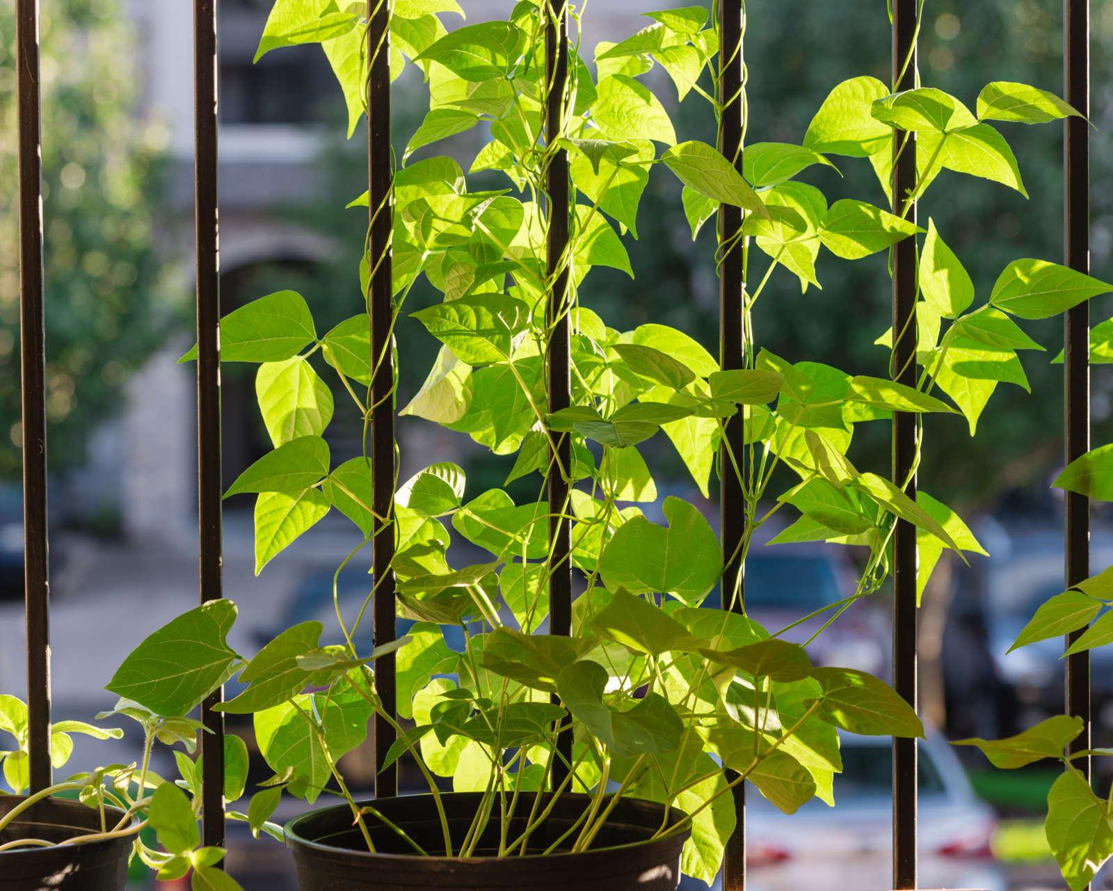 Gemüse Im Topf Anbauen Die 10 Besten Sorten Für Die Topfkultur