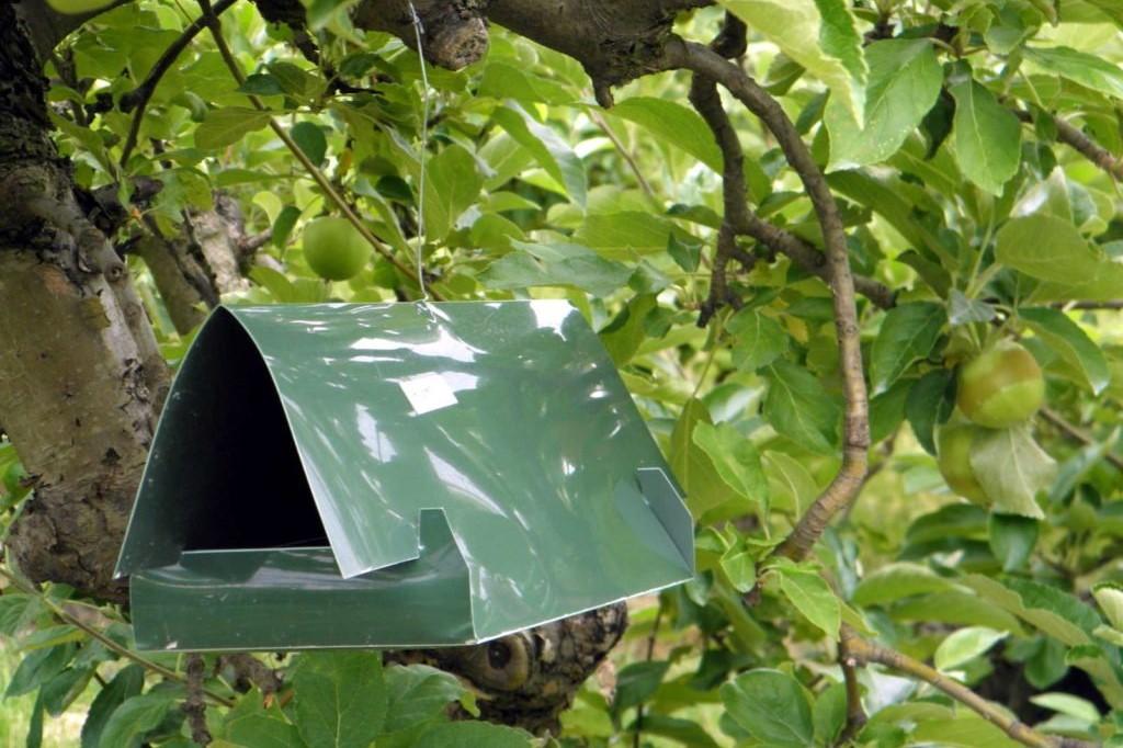 Pheromonfalle gegen Apflegespinstmotten im Baum