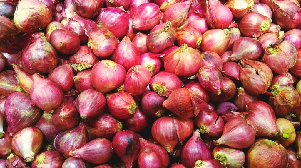 Schalotten rosa geerntet viele