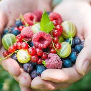 Die Besten Beerensorten Für Ihren Garten