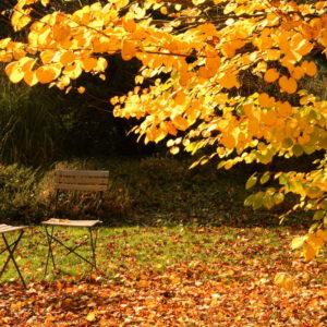 Garten Im Herbst: So Bleibt Er Länger Nutzbar
