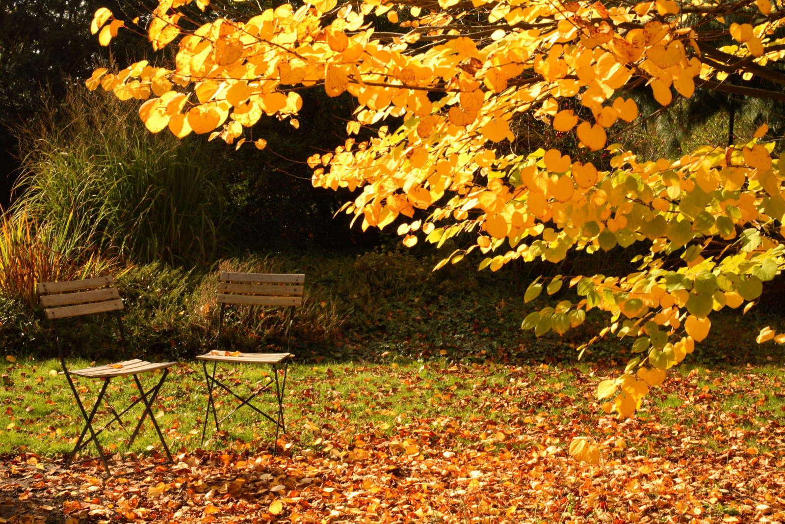 Garten Im Herbst : garten im herbst so bleibt er l nger nutzbar plantura ~ Watch28wear.com Haus und Dekorationen