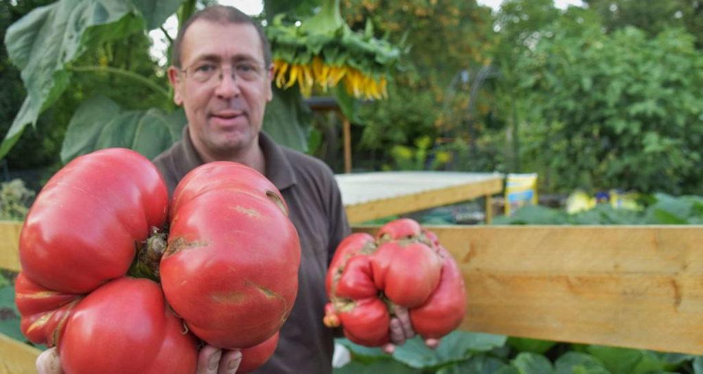 Udo Karkos hält schwerste deutsche Tomten in der Hand