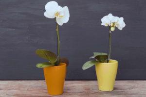 Die Orchidee Steckt Nun Ihre Volle Kraft In Das Wachstum Einer Riesigen Blüte