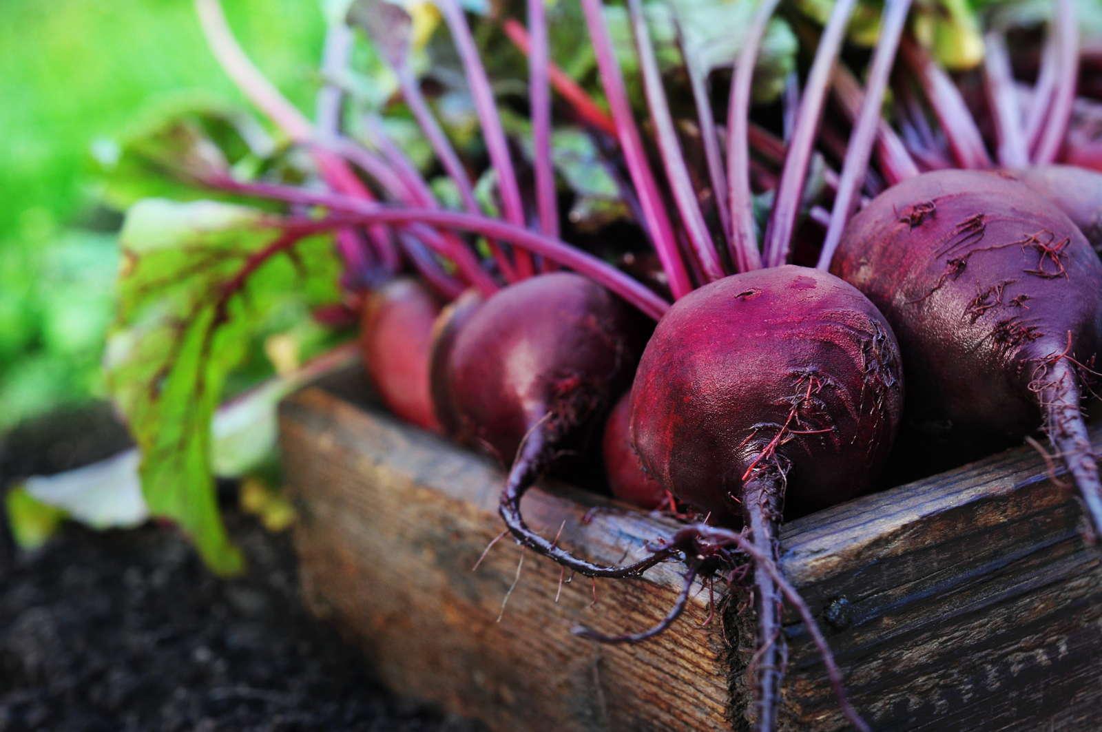 gem se im herbst anbauen die 10 besten pflanzen f r die nachkultur plantura. Black Bedroom Furniture Sets. Home Design Ideas