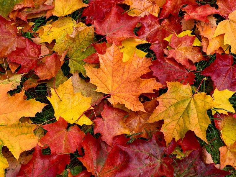 Herbstlaub im Garten: 5 tolle Tipps & Anwendungen