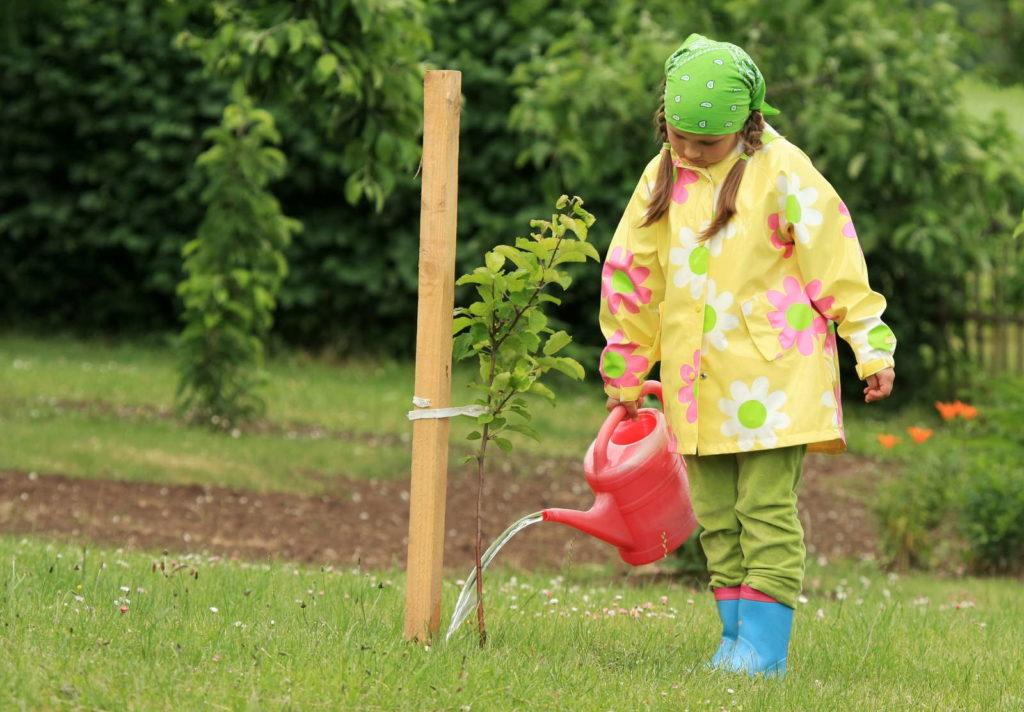 Mädchen gießt frisch eingepflanzten Pflaumenbaum