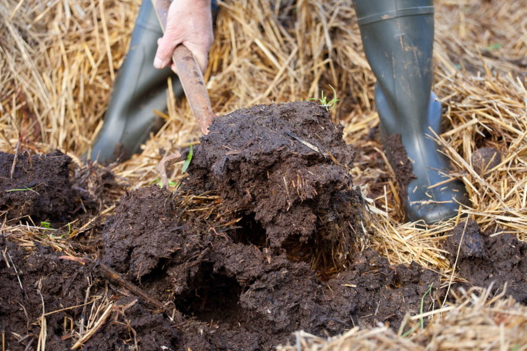 Mann hält Mistgabel in kompostiertem Mist