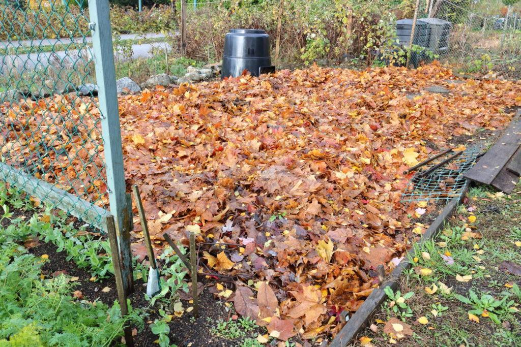 Mulchen mit Laub im Garten