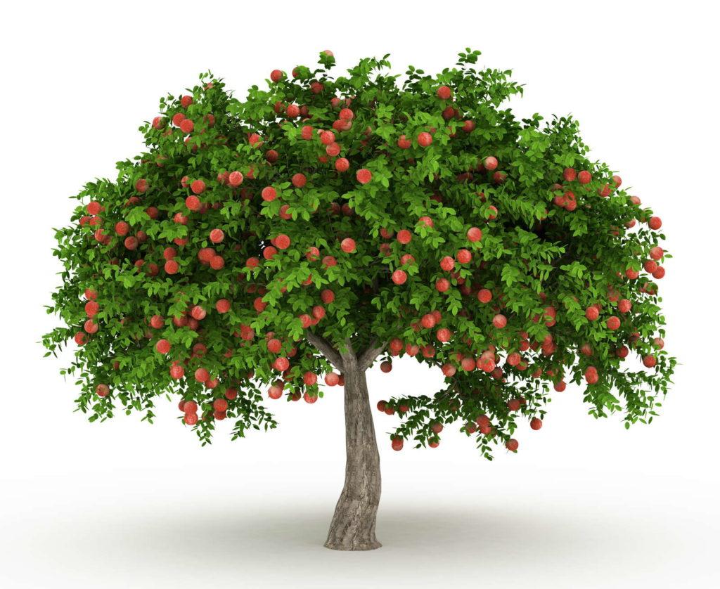 EIn Apfelbaum mit Hochstamm