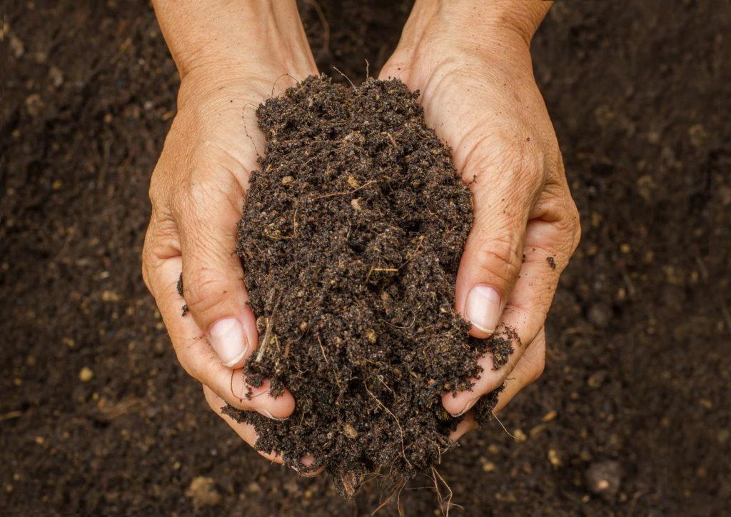 Kompost aus Laub wird gehalten