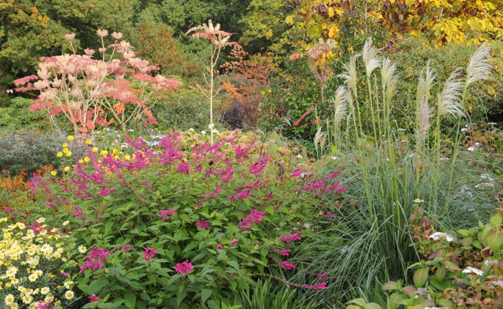 Pampasgras neben anderen Pflanzen im Garten