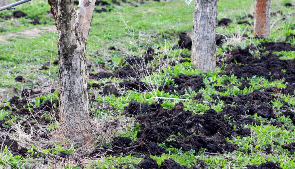 Apflelbaum Stämme im Boden
