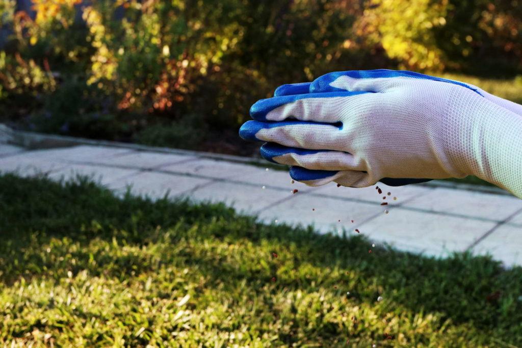 Dünger wird auf Rasen verteilt