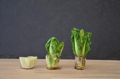 Regrowing: Das Nachwachsenlassen von Gemüseresten