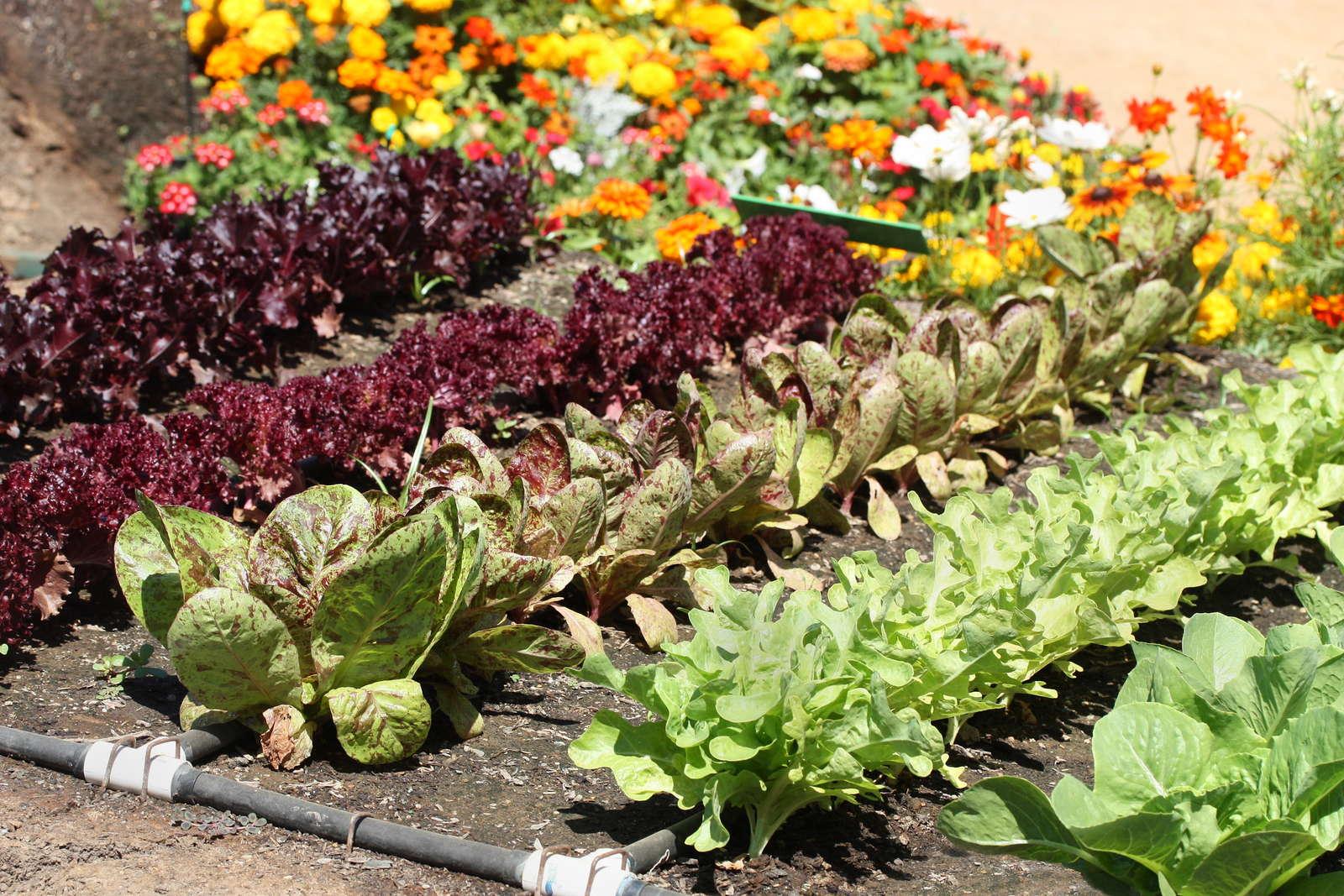 Gemüseanbau: 10 Tipps für Einsteiger - Plantura