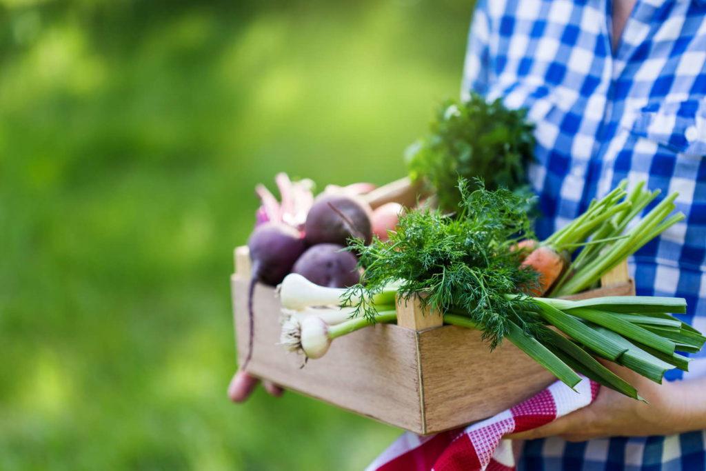 Eine Person hält ihr frisch geerntetes Gemüse