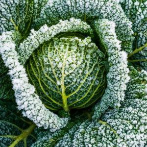 Wintergemüse: 5 Tipps Rund Um Den Gemüseanbau Im Winter