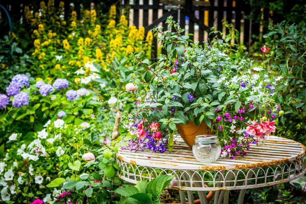 bunte Fuchsien im Garten