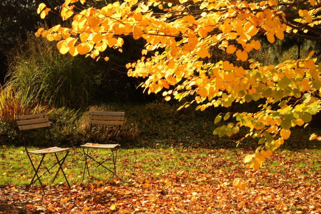 Garten im Herbst mit Laub und Stühlen