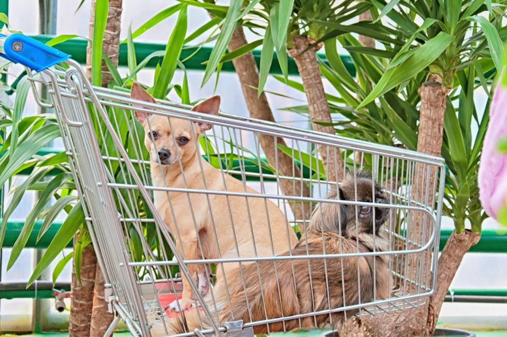 Yucca Palmen und zwei Hunde in einem Einkaufswagen