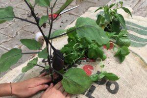 Erdsack Wird Bepflanzt