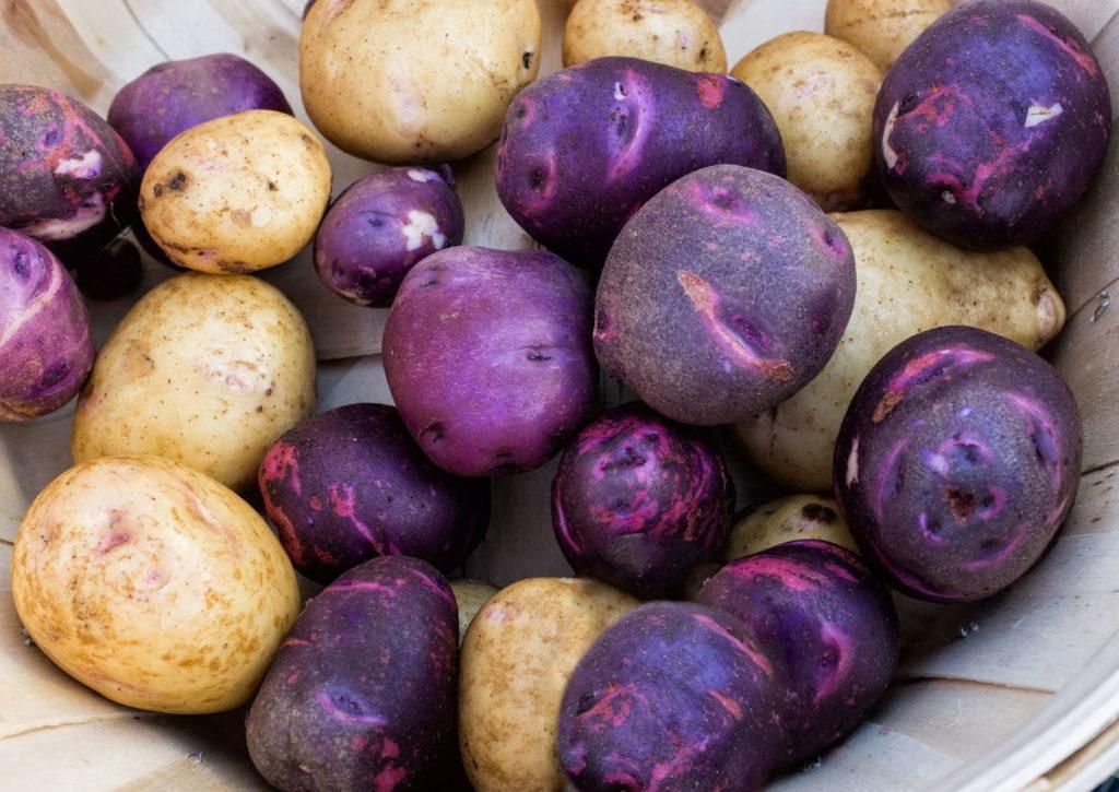 Lilane und braune Kartoffeln