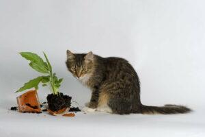 Katze Sitzt Neben Zerbrochenem Topf