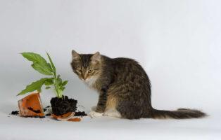 10 Giftige Zimmerpflanzen Für Haustiere