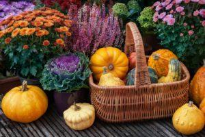 Korb Mit Kürbissen Und Blumen Im Herbst Auf Terasse