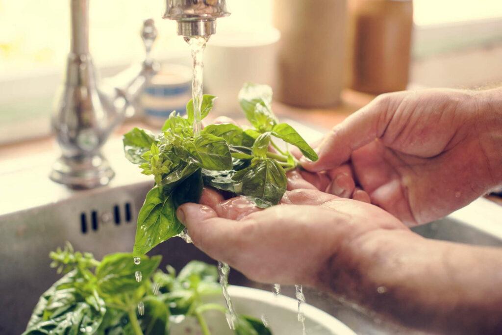 Kräuter werden gewaschen