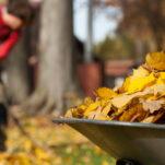 Herbstputz im Garten: Unsere Top 10 Tipps