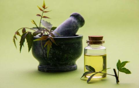 Neemöl: Herstellung & Wirkung Des Pflanzlichen Pflanzenschutzmittels