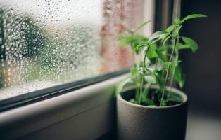 12 Pflanzen, Die Auf Dem Fensterbrett Gedeihen (auch Im Winter)