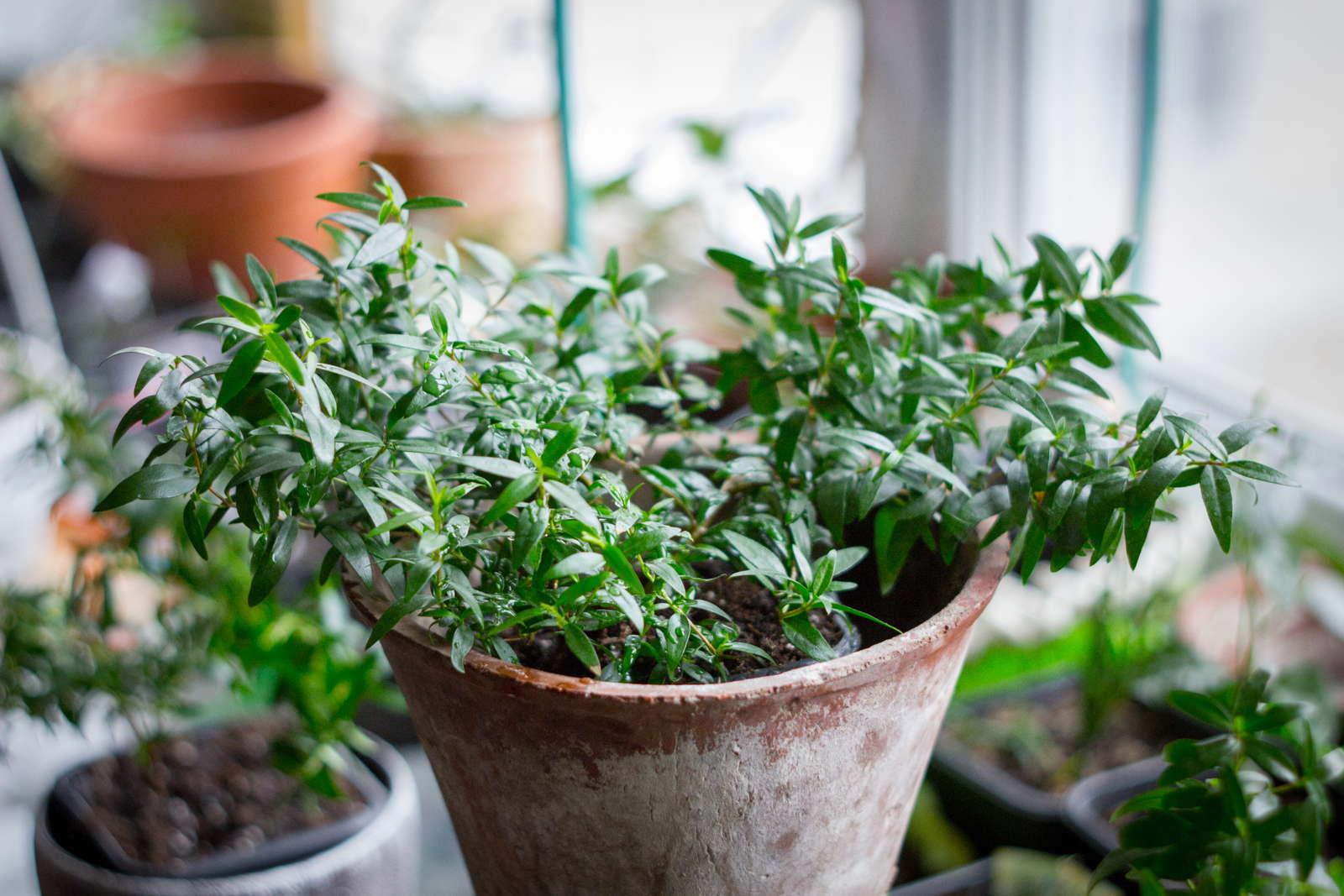 pflanzen richtig berwintern 10 experten tipps f r ihren garten plantura. Black Bedroom Furniture Sets. Home Design Ideas