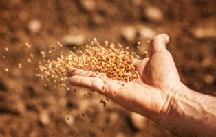 Saatgutversender Für Altbewährte Sorten: Unsere Top 9