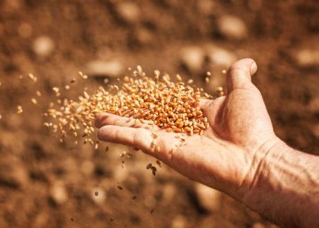 Saatgutversender Für Altbewährte Sorten: Die 9 Besten In Deutschland