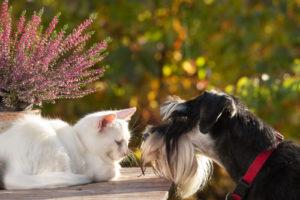 Weiße Katze Und Schwarzer Hund Sitzen Im Garten