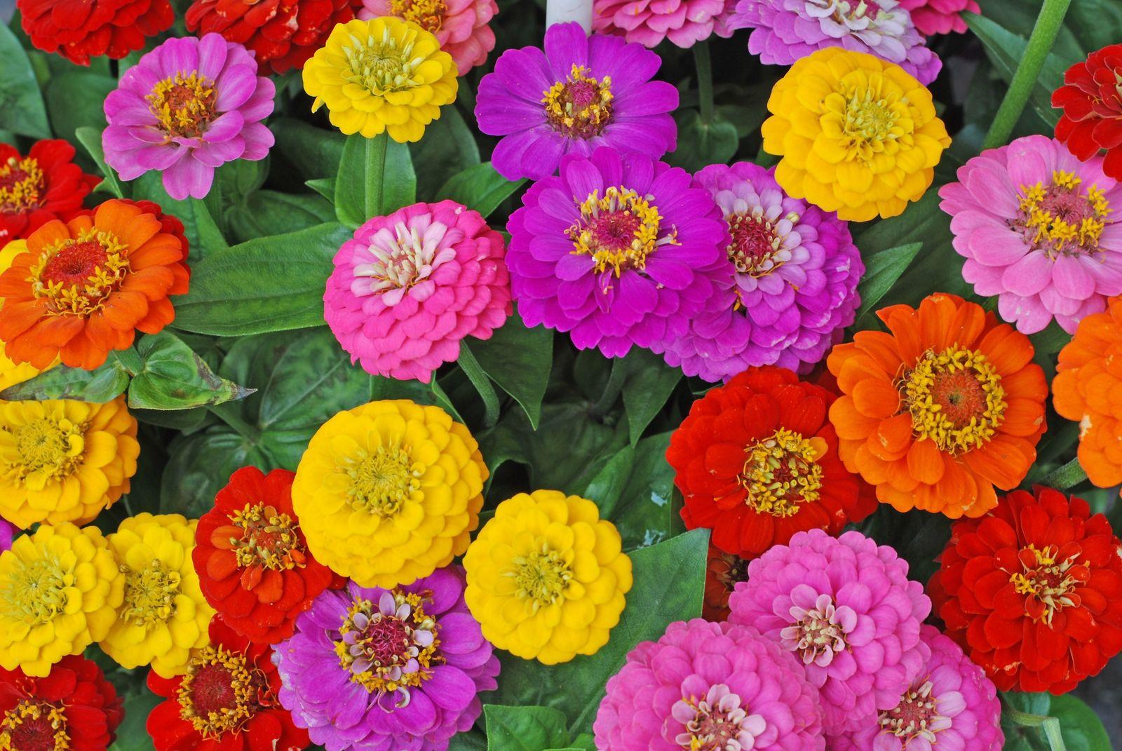 Herbstblumen Die 10 Schonsten Fur Ihren Garten Plantura