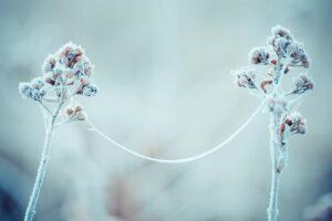 Pflanze Gefroren Im Winter