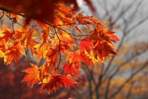 Ast Mit Orangenen Blättern Im Herbst