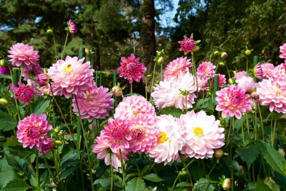 Herbstblumen: Die 10 schönsten für Ihren Garten