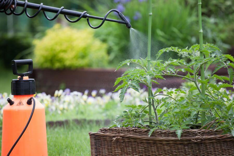 Neemöl wird auf Pflanze gesprüht