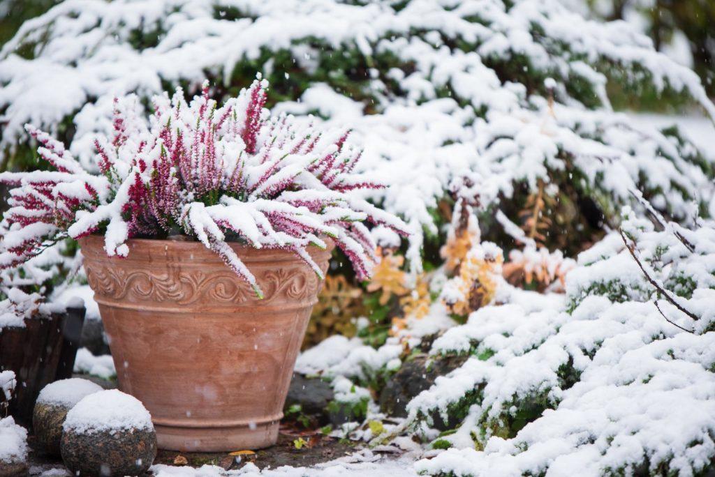 Pflanze im Topf im Winter mit Schnee